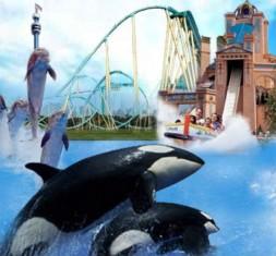 SeaWorld 50th Anniversary